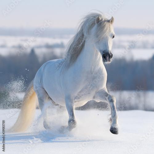Fototapeten,galopp,winter,weiß,walflosse