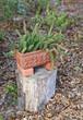 garden plant