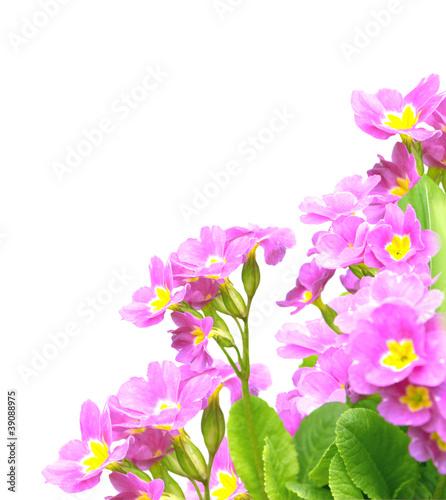 Papiers peints Lilac Spring flowers
