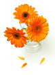 orange gerber flowers in a glass