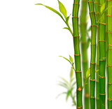 Fototapety Young bamboo sprouds isolated on white background
