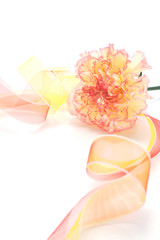 Pink yellow carnation with ribbon isolated on white background