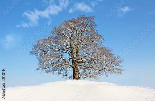 Winter tree at the top of the hill