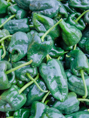 Organic green peppers sold at outdoor farmers market