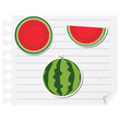 Icon watermelon on a blank notepad vector illustration design el