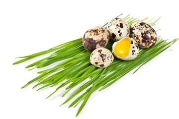 quail eggs on a green grass