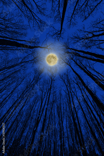tree silhouettes and moon