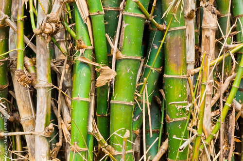 kepa-bambusa