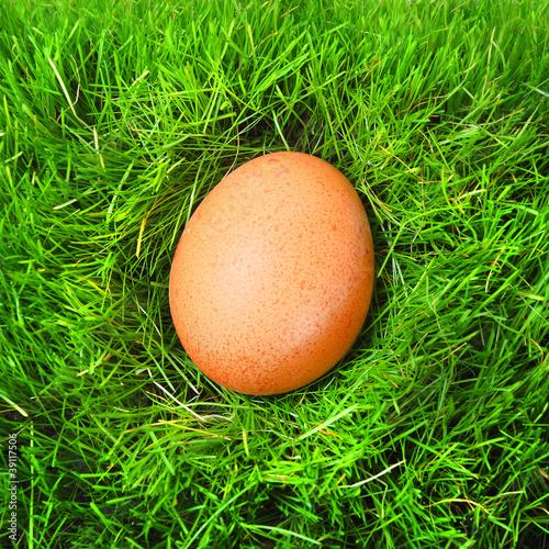 The hen egg in fresh spring grass. - 39117506