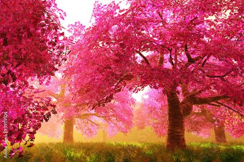 tajemnicze-drzewa-wisni