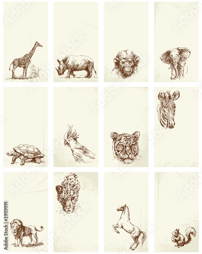 business card - wild animals