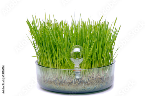 Light bulb in grass