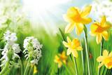 Fototapety Cheerful Spring Bulbs