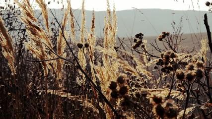 erba alta nel vento