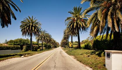 Palm road in Santa Barbara
