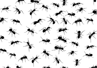 background with isolated ants