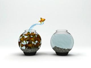 pesci acquario salto, vantaggio competitivo, nuovi orizzonti