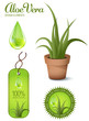 Aloe Vera, design elements
