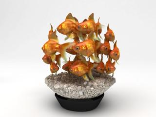 pesci acquario