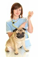 médecin vétérinaire avec chien isolé