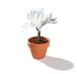 Blumentopf mit Blume