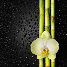 orchidée et en bambou bosquet sur le noir