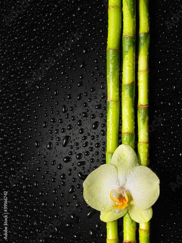 orchidea-i-bambusowy-gaj-na-czarnym-tle