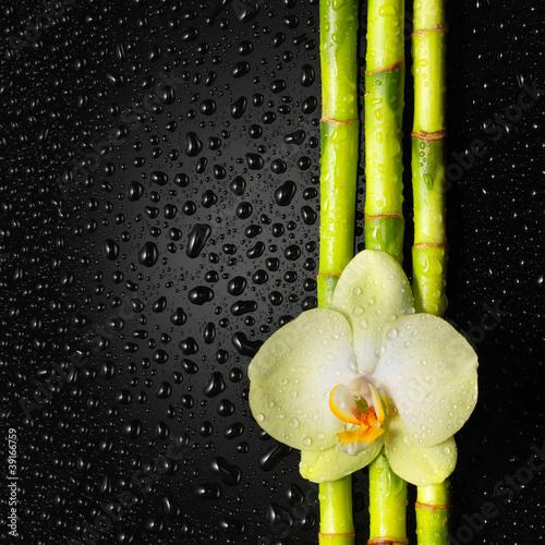 bambus-i-orchidea