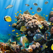 Coral colony and coral fish