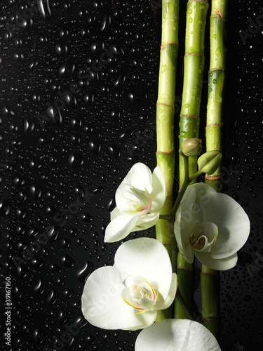 orchid and bamboo grove on black background