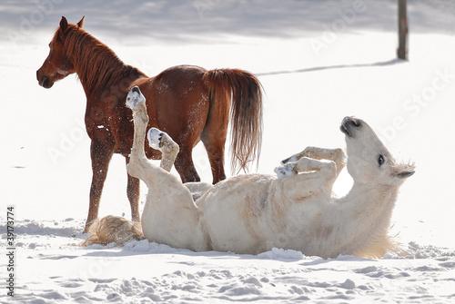 Cavalli su neve