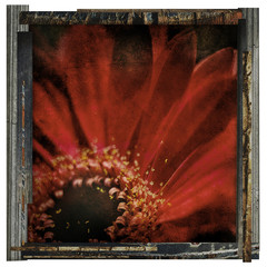 framed red flower