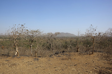 dry deciduous forest