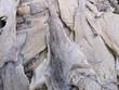Dried salted cod, bacalao seco salado.