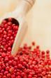 "Pink or Brazil Pepper (""Schinus terebinthifolius"")"