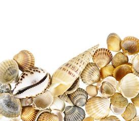 shells border