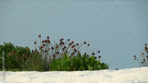wild beach with white coral sand