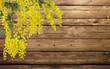 mimosa sul legno