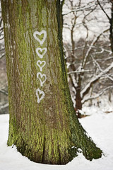 Five hearts painted on the bark of a tree