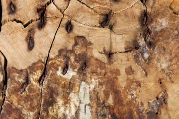 Holz mit rostigem Metall