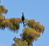 cormorant perched on the tropical tree