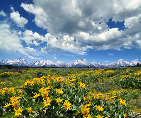 A Beautiful view at Grand Teton National park