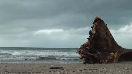 Tree on the beach slow motion