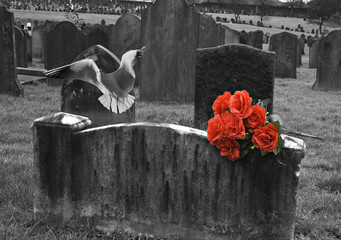 Blank headstone in graveyard with bunch of red roses and seagull