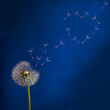 dandelion and flying seeds heart shape