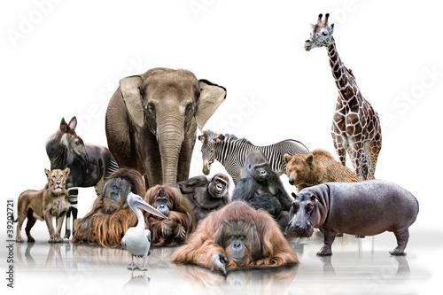 Fotobehang Giraffe Wilde Tiere