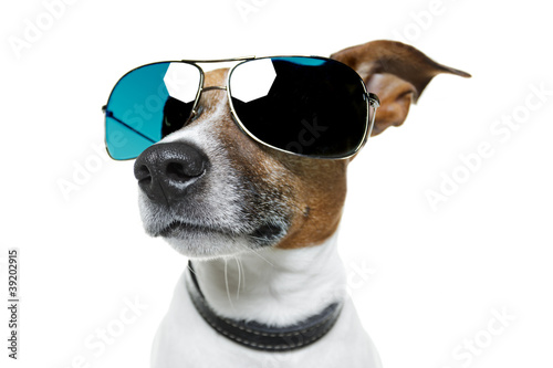 Dog with blue shades
