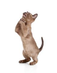 Funny kitten begging for something