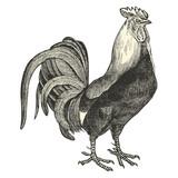 Coq Dorking