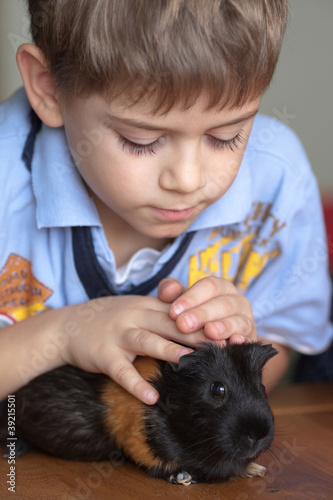 Boy and guinea pig